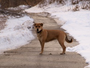 outdoor-pet-safety-tips-dog-snow-winter