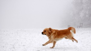 outdoor-pet-safety-tips-winter-dog-running-walk-snow