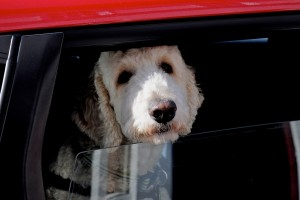 outdoor-pet-safety-tips-dog-car-cold-winter