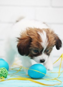 Easter Pet Reminders
