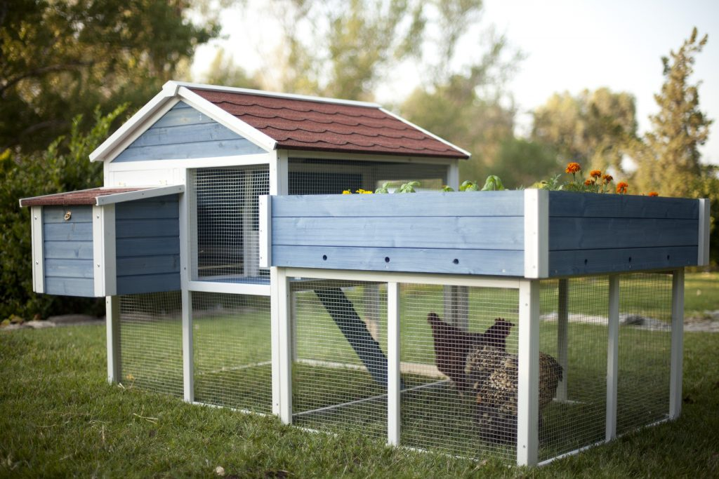 Chickens and Plant Toxins