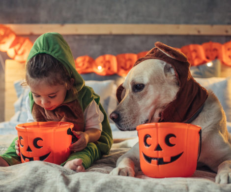 Little girl and his dog in costumes on bed celebrating Halloween
