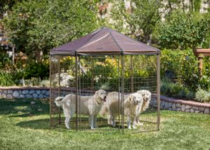 PET GAZEBO® Outside